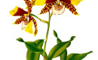 Orchid Show 2014