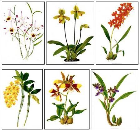 Orchid Prints