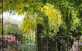 The Laburnum Tunnel