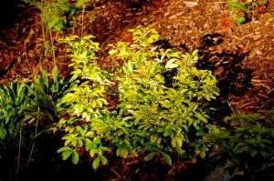 Dene Garden plants