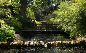 The Dene Garden